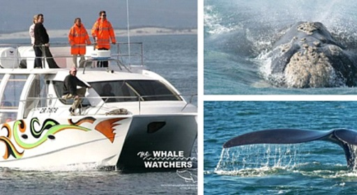 Hermanus Whale Watchers Final