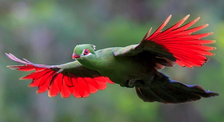 Birds of Eden 768x419